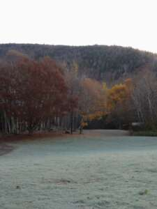 Park landscape with frost on grass