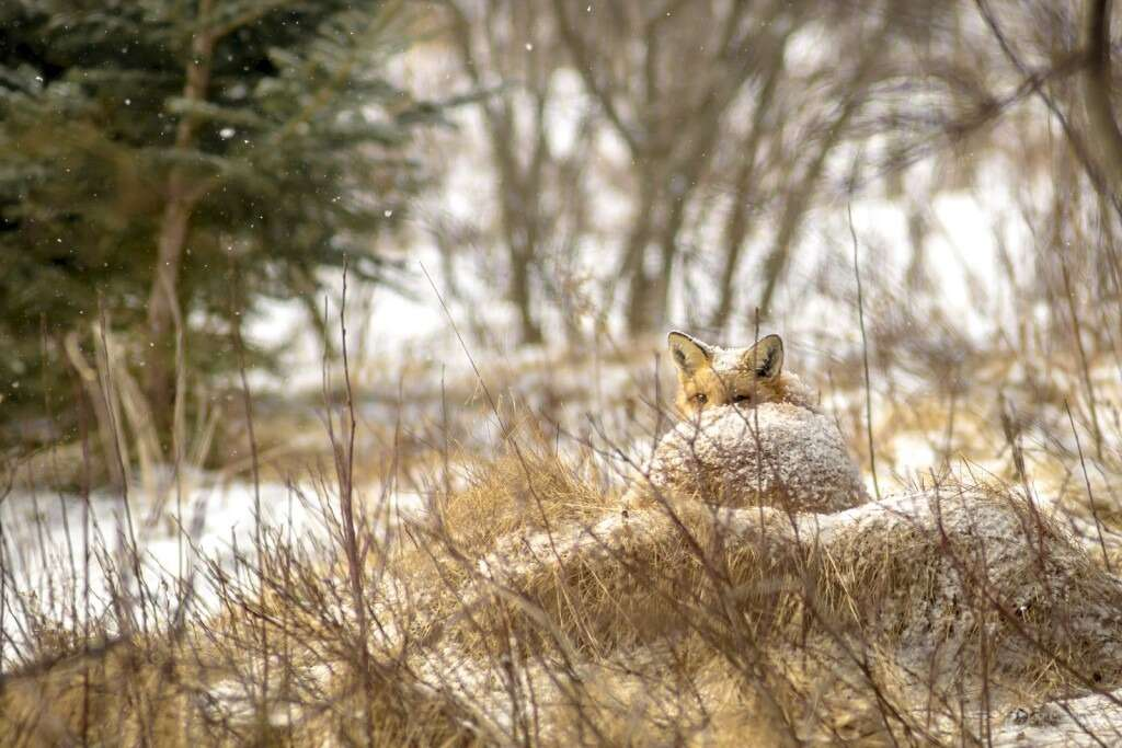 Wildlife on Cape Breton Island