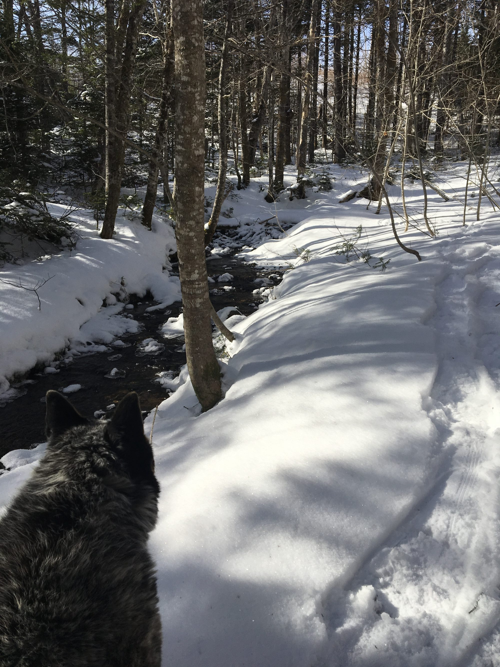 Sun, Snow & Snowshoe tracks on Iron Mountain